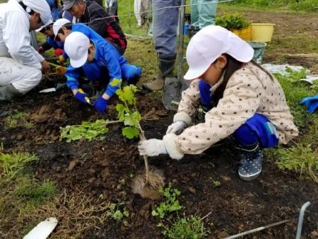 「2分の1成人式」信更小学校児童がブドウ苗木植え付け